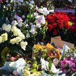 Diversas variedades de flores expostas
